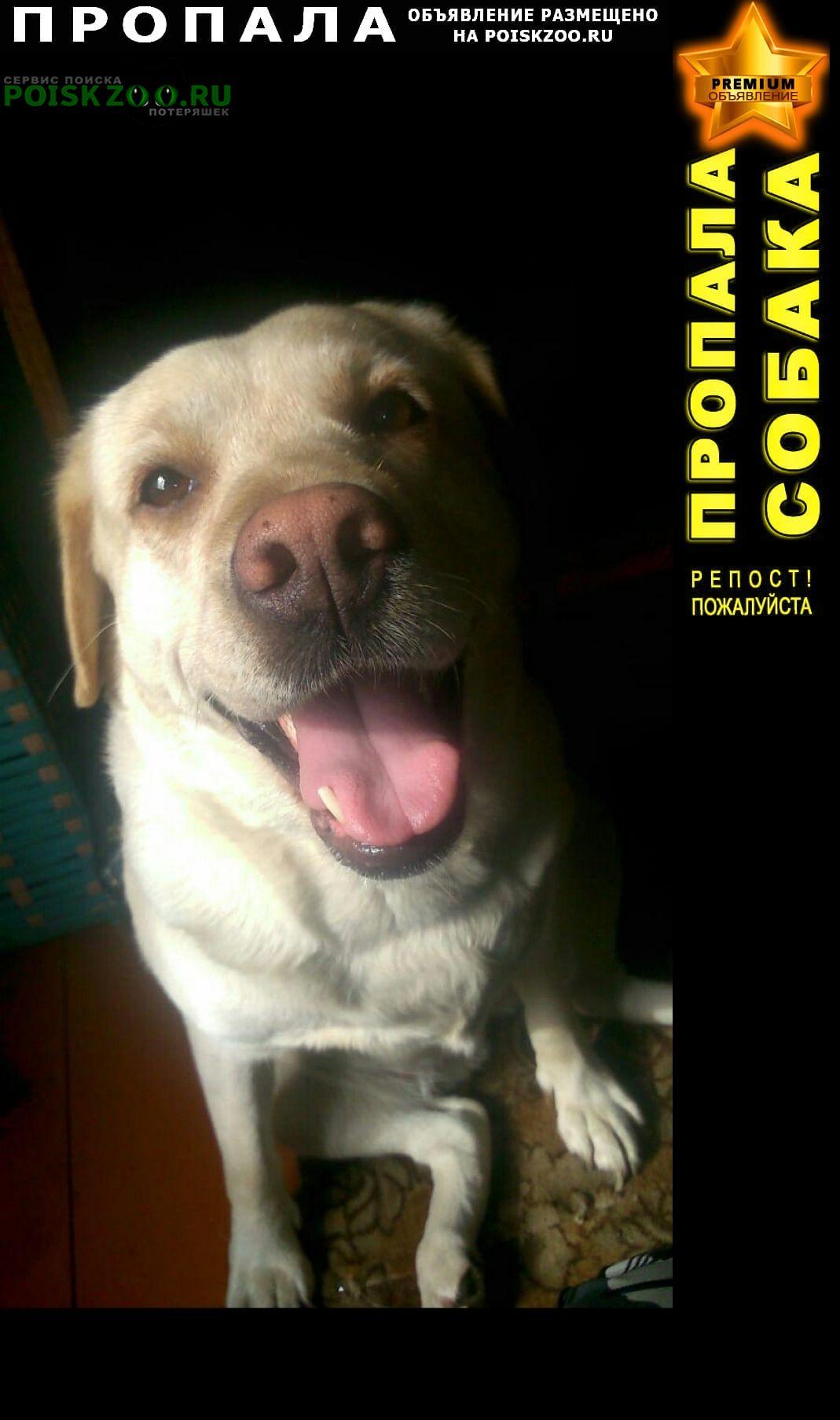 Пропала собака верните пожалуйста Прокопьевск