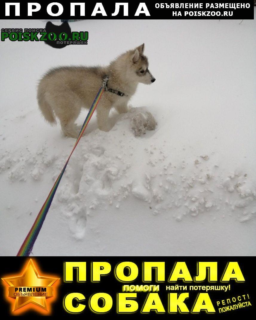 Пропала собака кобель Пенза