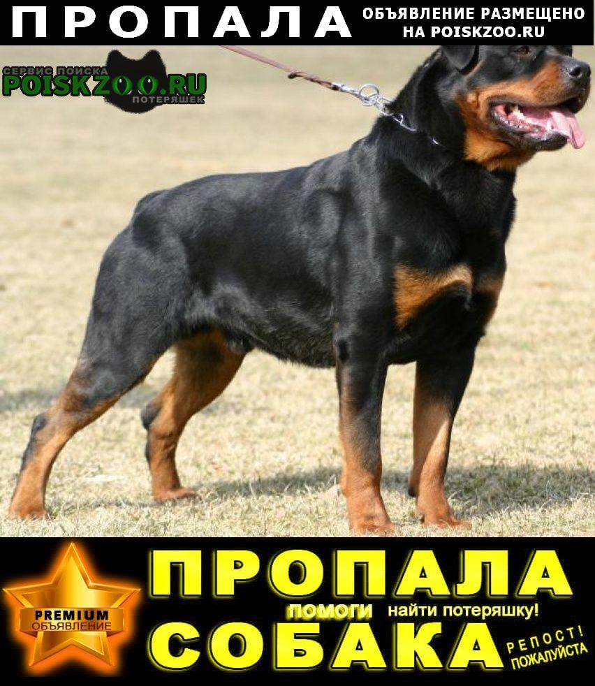 Краснодар Пропала собака