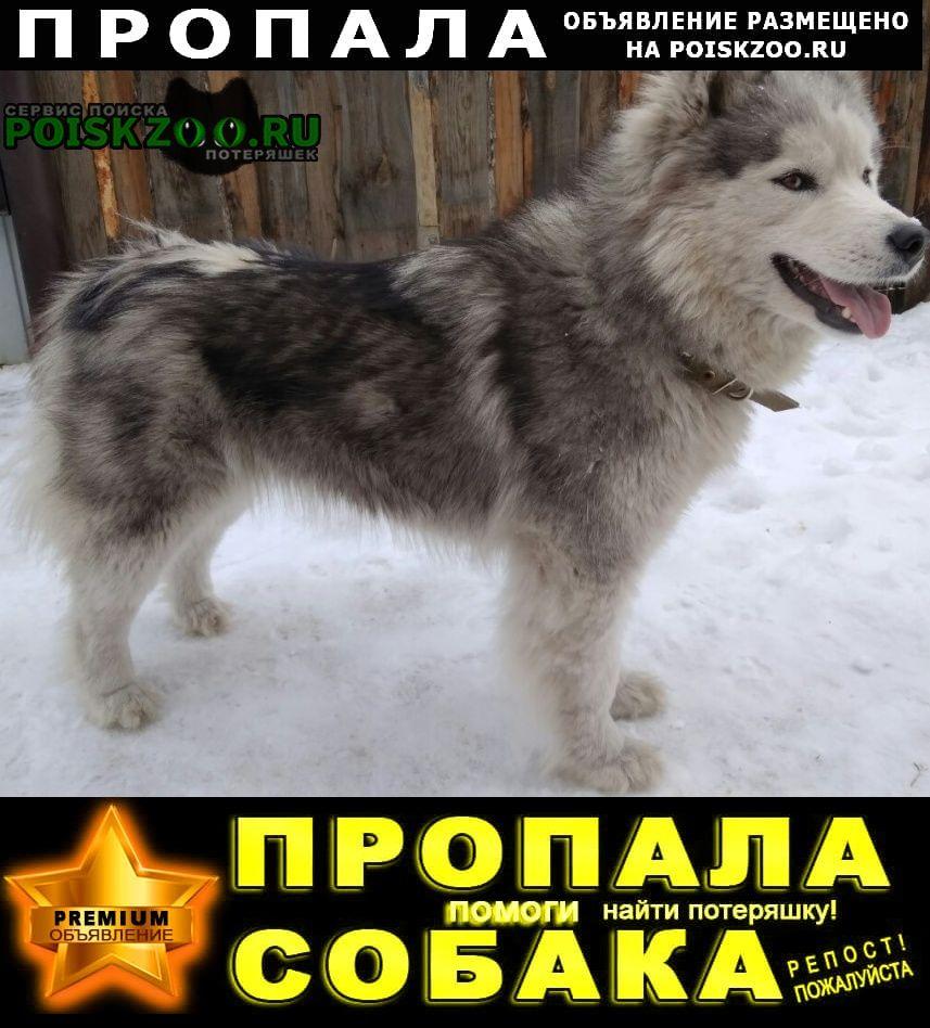 Пропала собака Абакан Хакасия