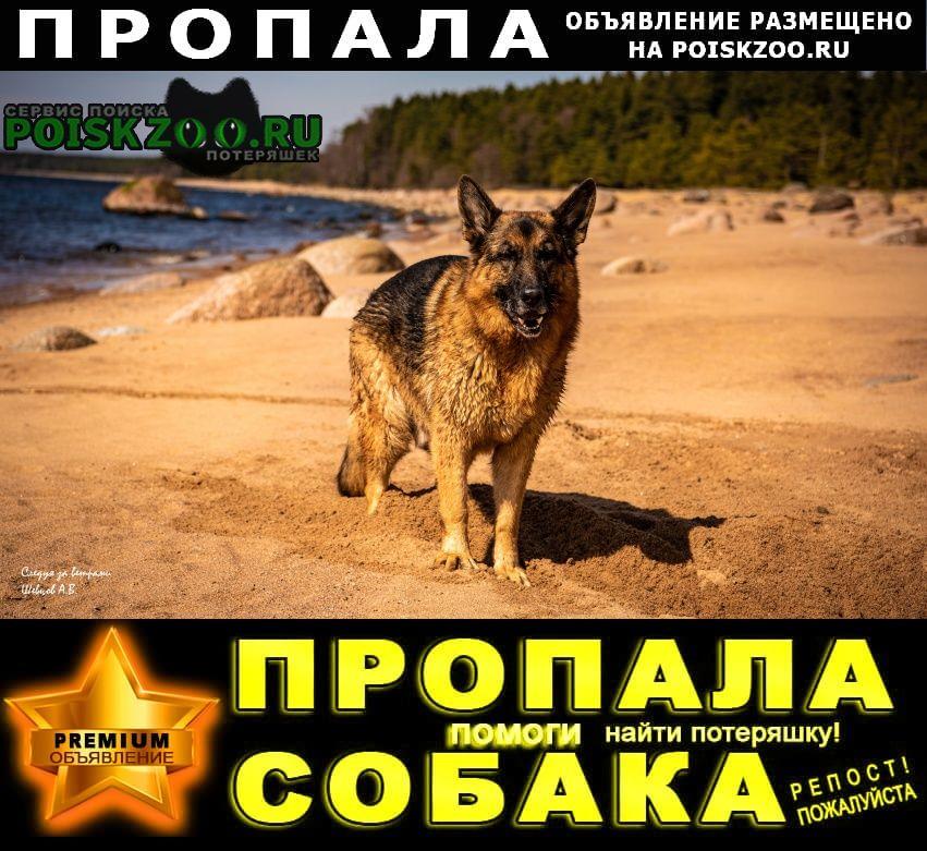 Пропала собака кобель член семьи Сертолово