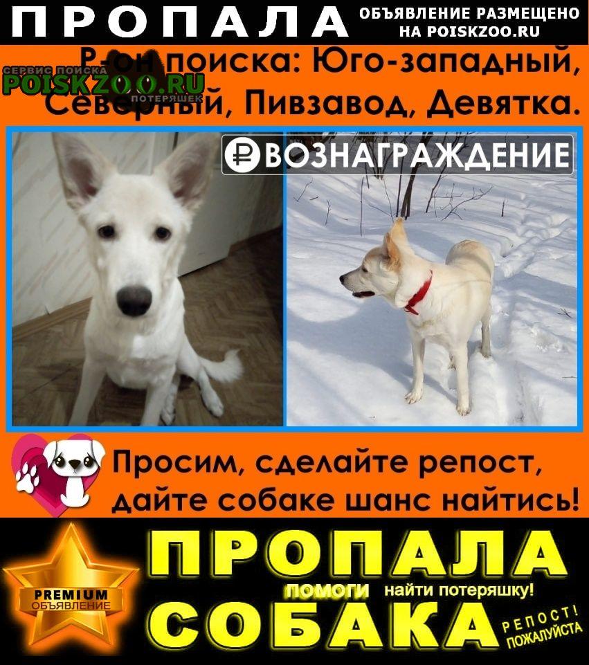 Пропала собака белая, 3 апреля Воронеж