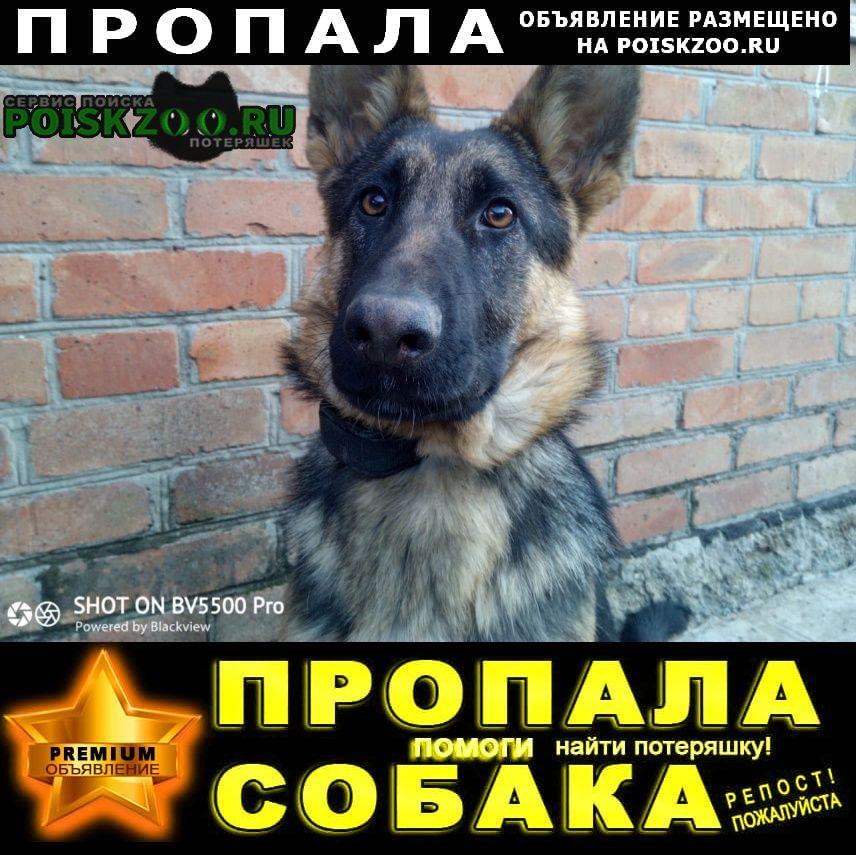 Батайск Пропала собака