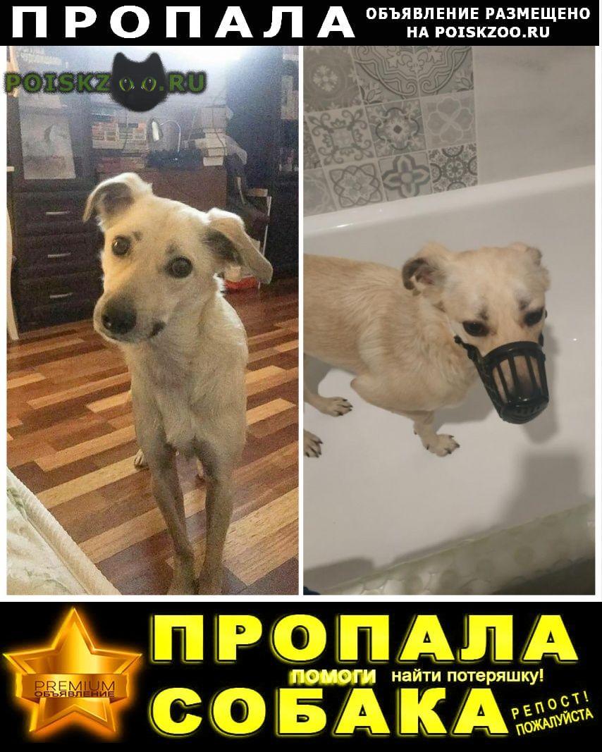 Пропала собака дворняжка, девочка, светлый окрас г.Красногорск