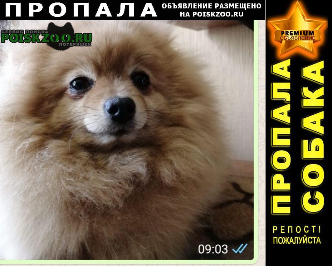 Пропала собака девочка-шпиц Нижний Новгород