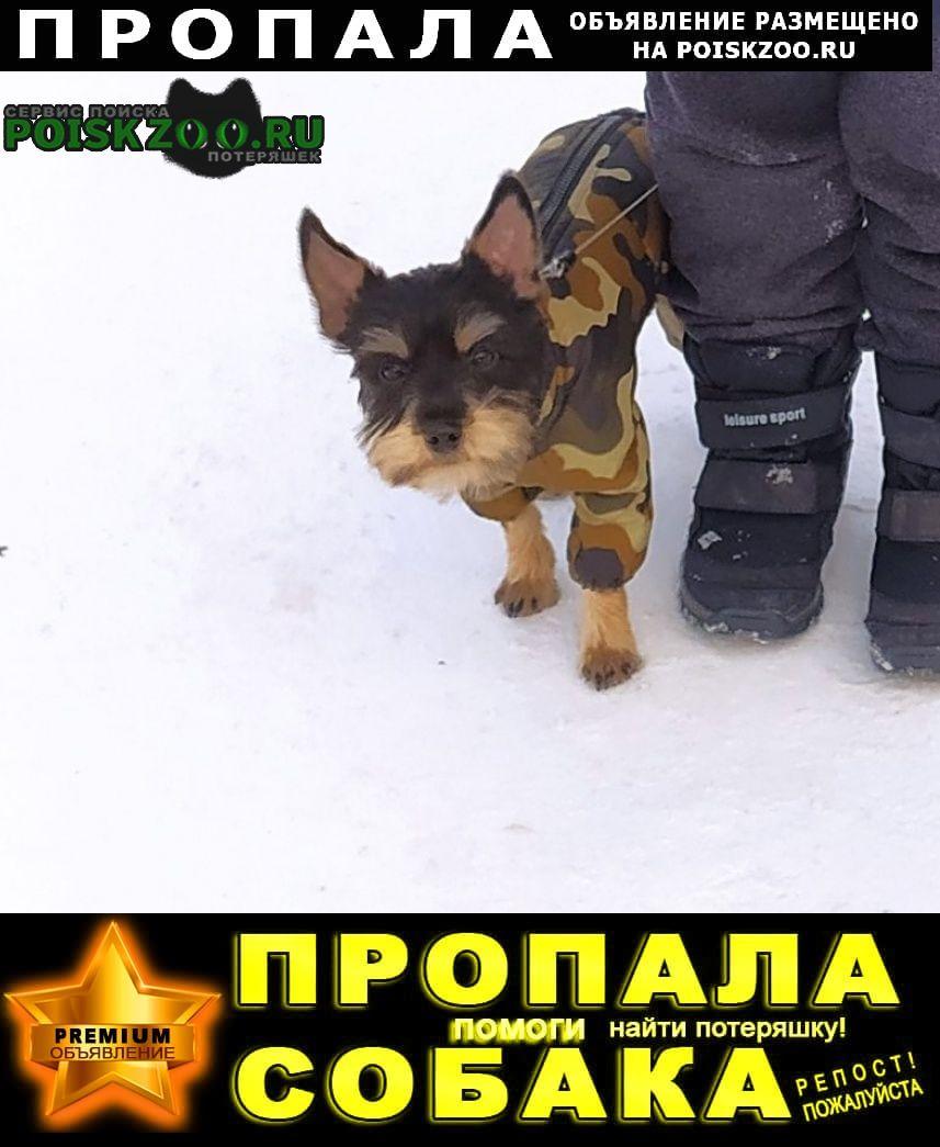 Приозерск Пропала собака кобель