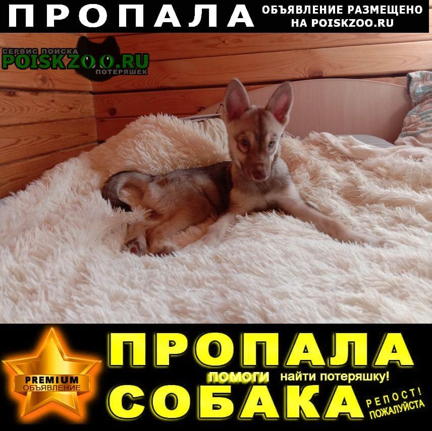 Пропала собака кобель Иркутск
