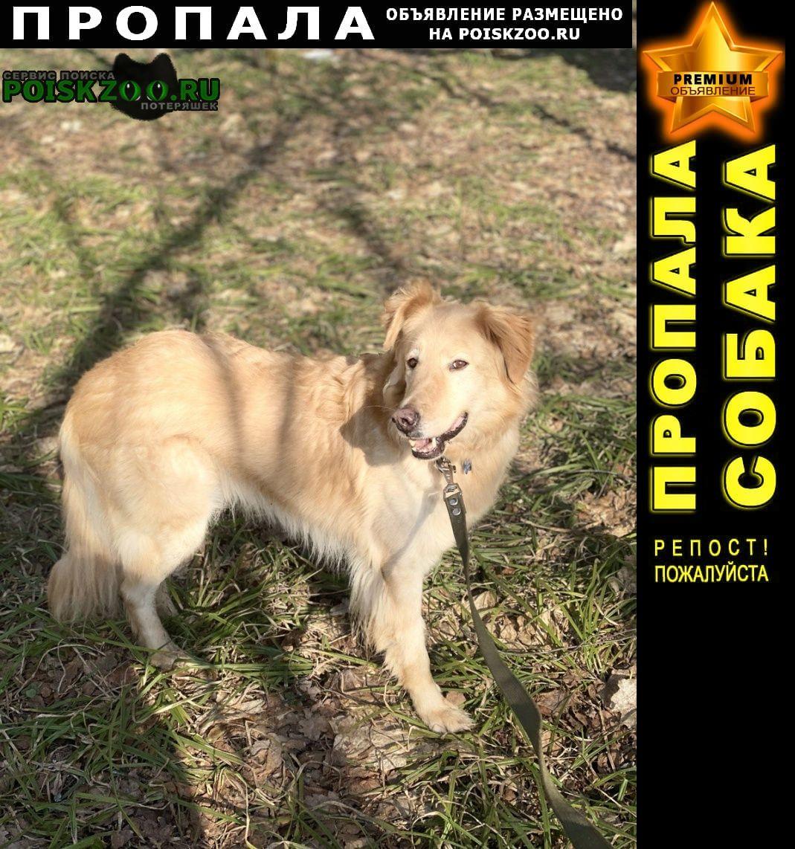 Пропала собака кобель рыжий пугливый пёс Истра
