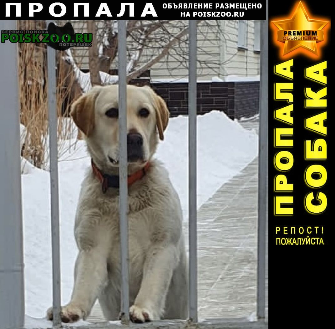 Пропала собака кобель, лабрадор Иркутск