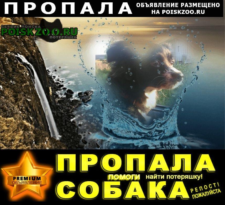Пропала собака помогите пожалуйста найти нашу днвочку Красноярск