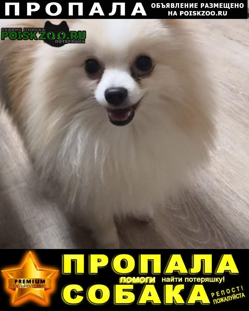 Пропала собака кобель помогите Сургут