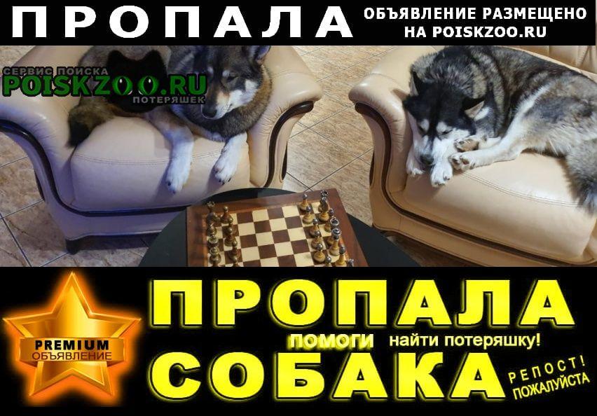 Пропала собака потерялись две собаки Красногорск