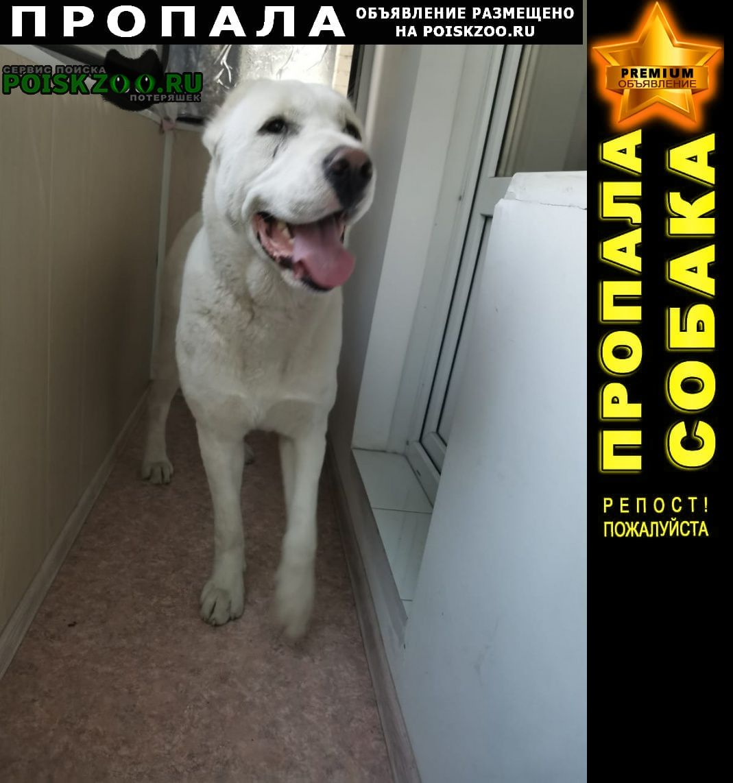 Пропала собака породы алабай Барнаул