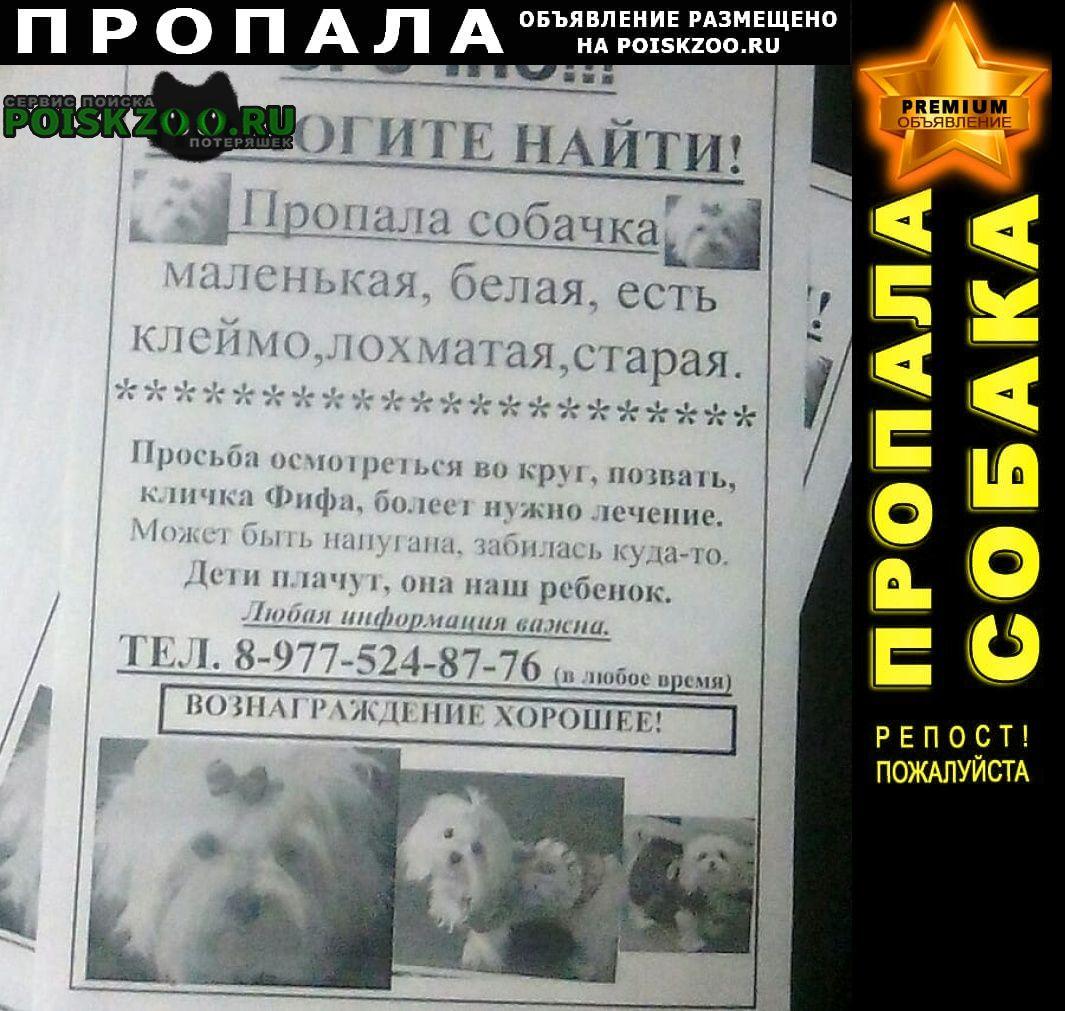 Пропала собака потерялась белая маленькая собачка Краснодар