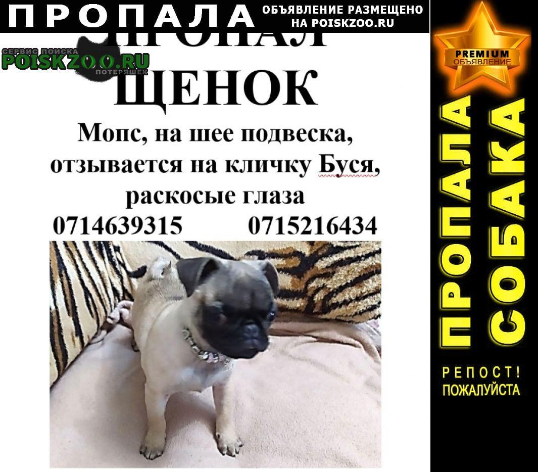 Пропала собака щенок мопсик Донецк Донецкая обл.