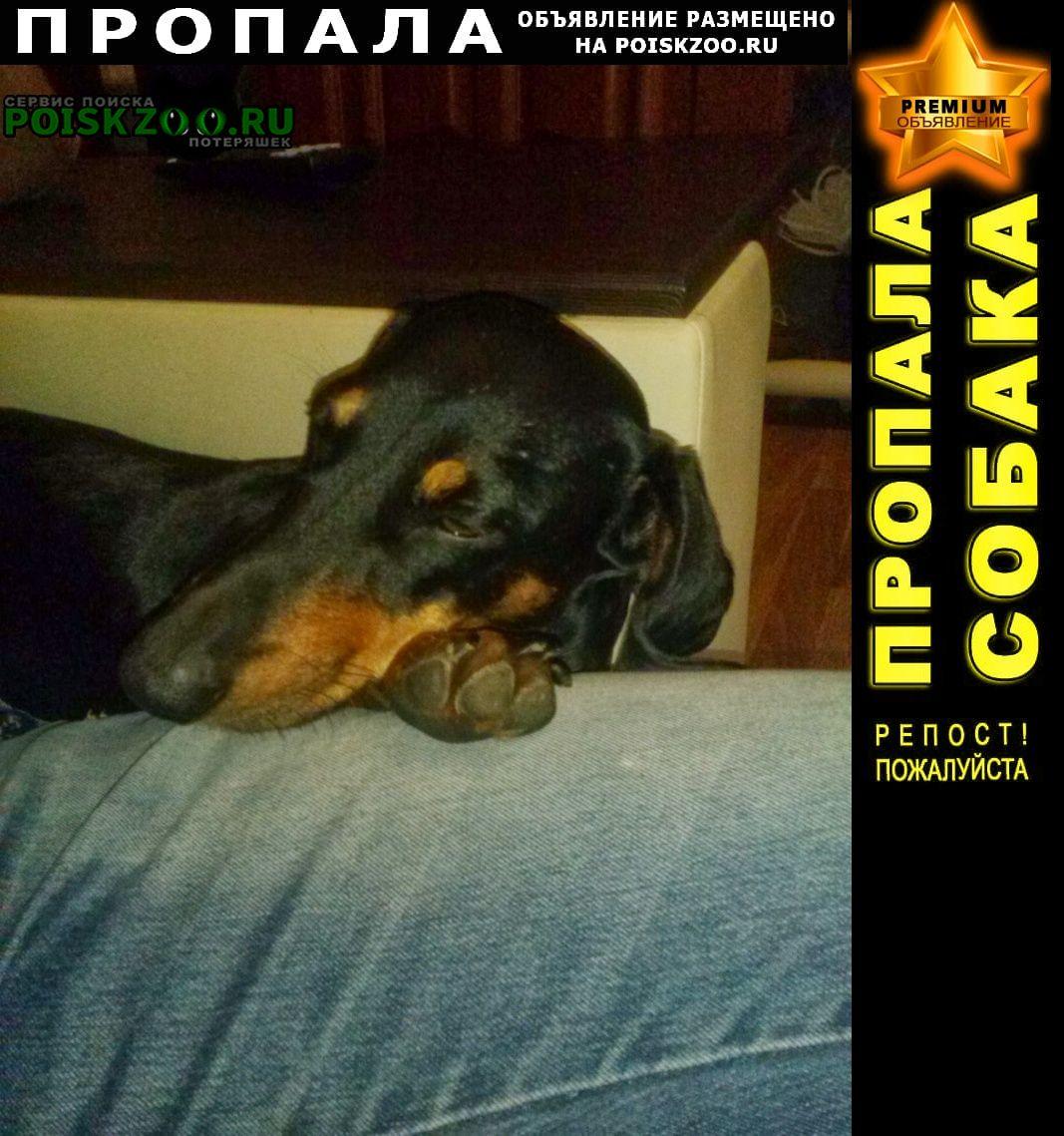 Пропала собака такса Волгоград