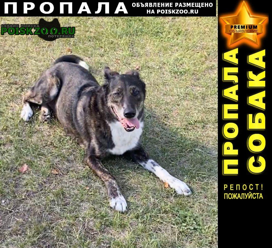 Пропала собака на кладбище чайка Рубцовск