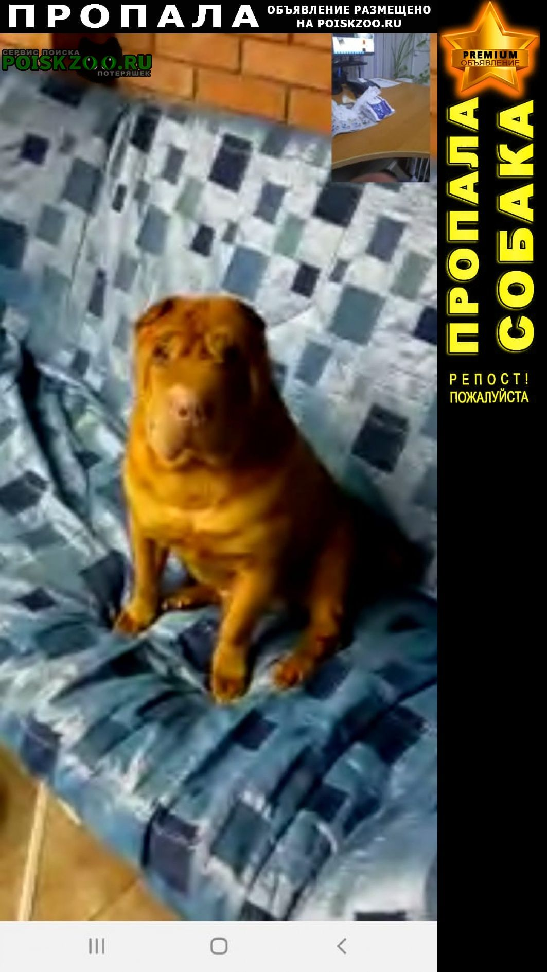 Пропала собака кобель в Тольятти
