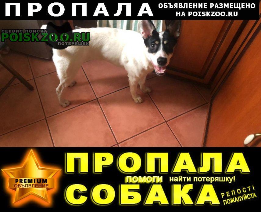 Пропала собака снт союз новый снопок Орехово-Зуево