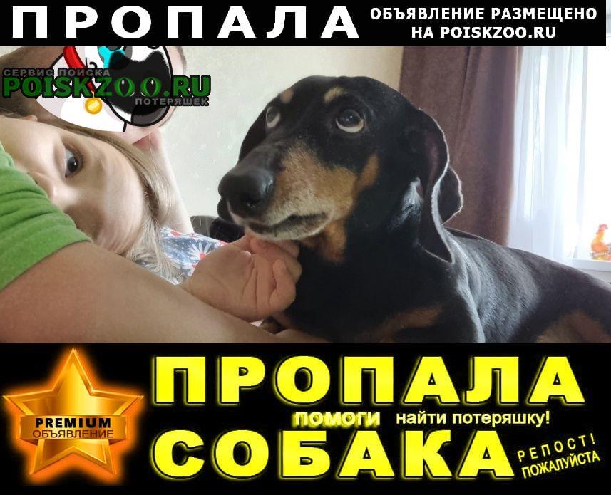 Пропала собака кобель вознаграждение Чита