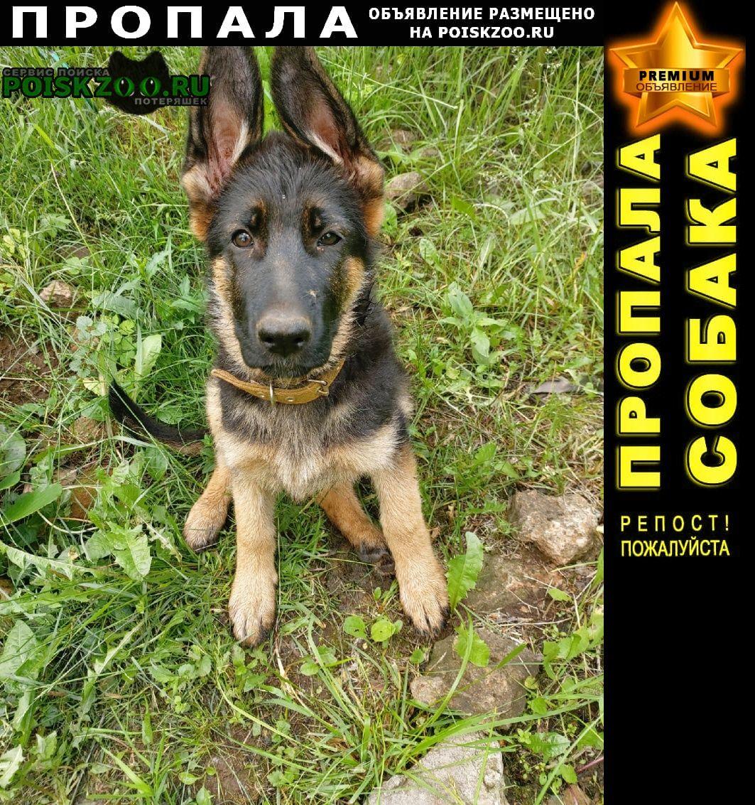 Пропала собака щенок немецкой овчарки, кличка юка Вязники