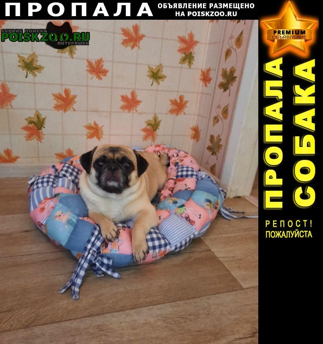 Пропала собака потерялась любимая собачка мопсик Анапа