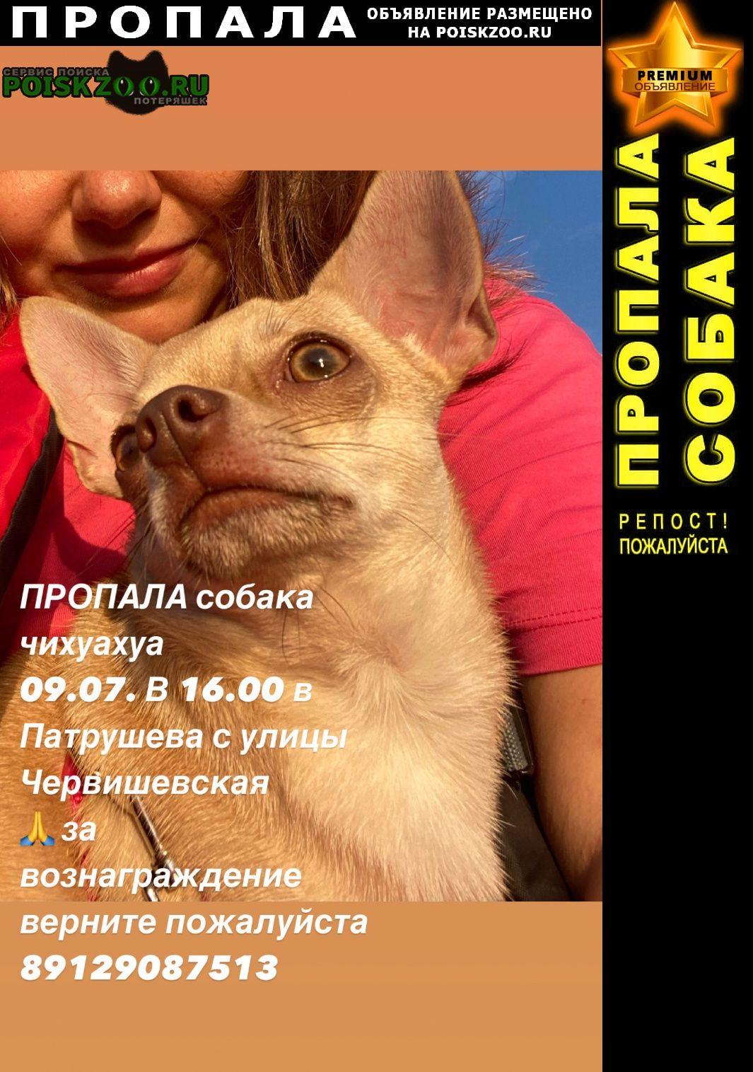 Пропала собака кобель за вознаграждение Тюмень
