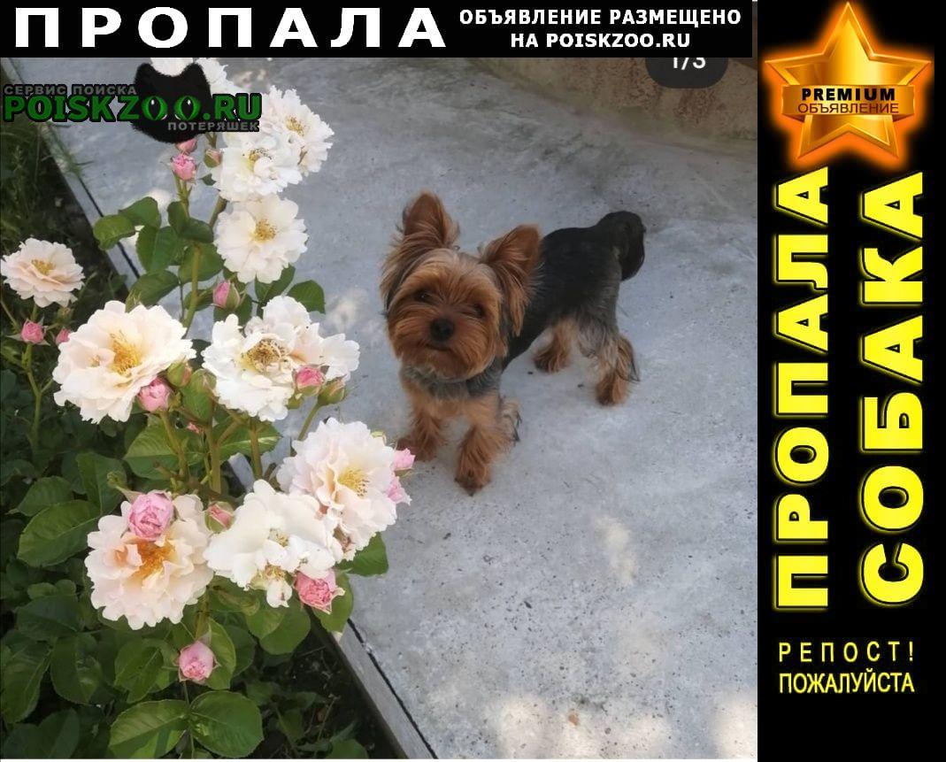 Пропала собака кобель йоркширский терьер Воскресенск