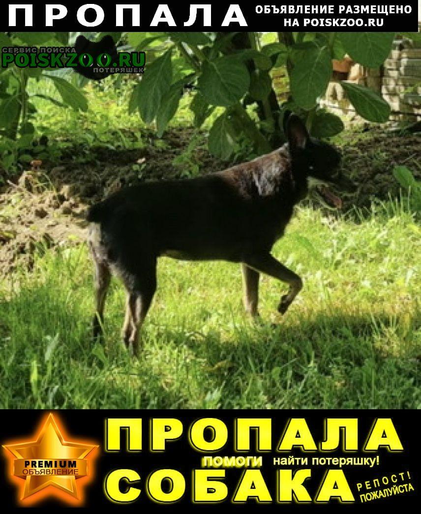 Пропала собака той-терьер, чёрная, 13 лет, кличка жуля. Калязин