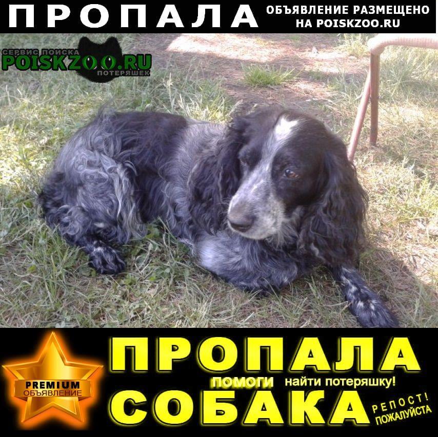 Пропала собака помогите найти за вознаграждение Байкальск