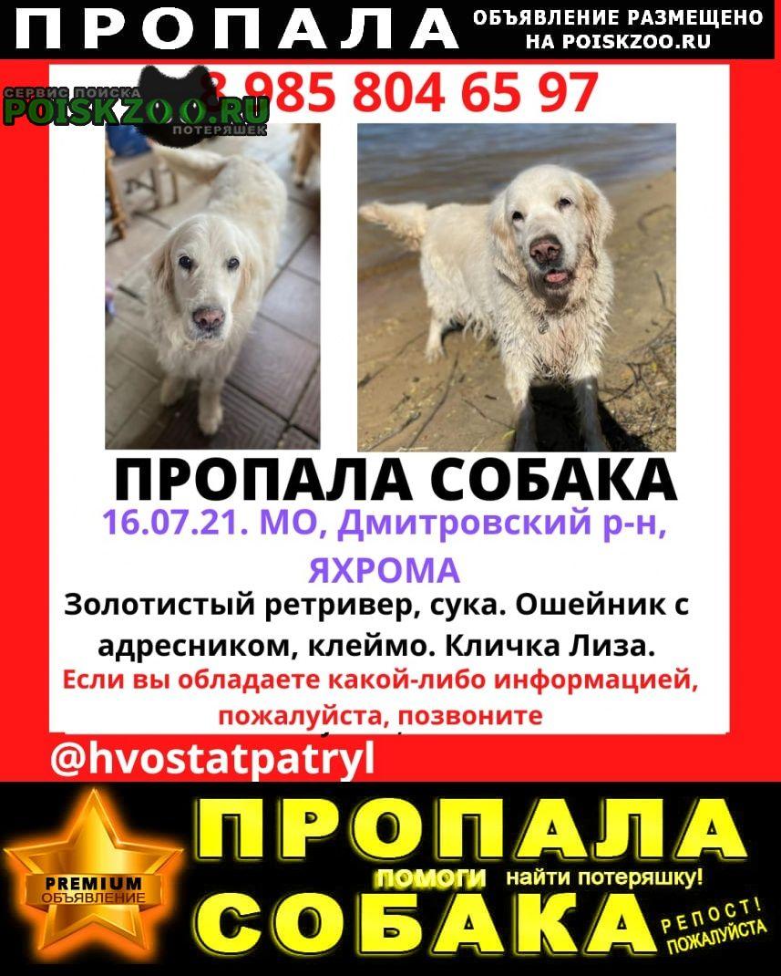 Пропала собака Дмитров