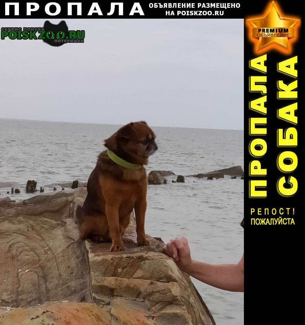 Пропала собака кобель Ахтырский