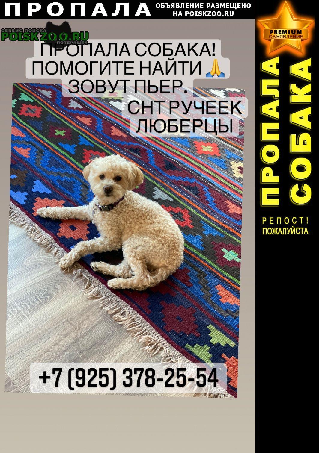Пропала собака кобель очень надеюсь на помощь Люберцы