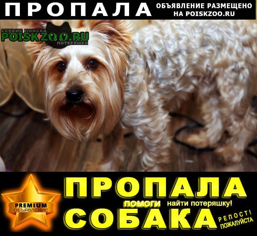 Пропала собака кобель Павловский Посад