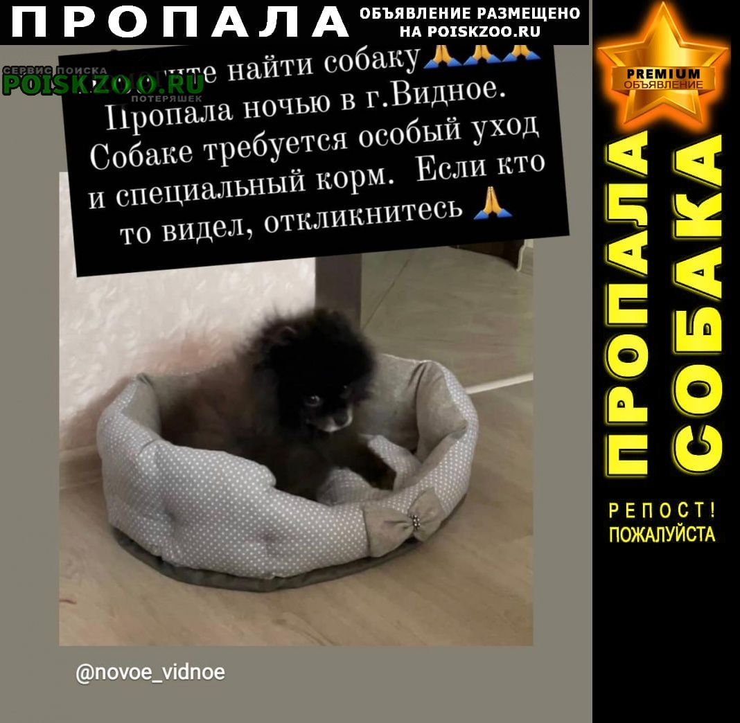 Пропала собака кобель Видное