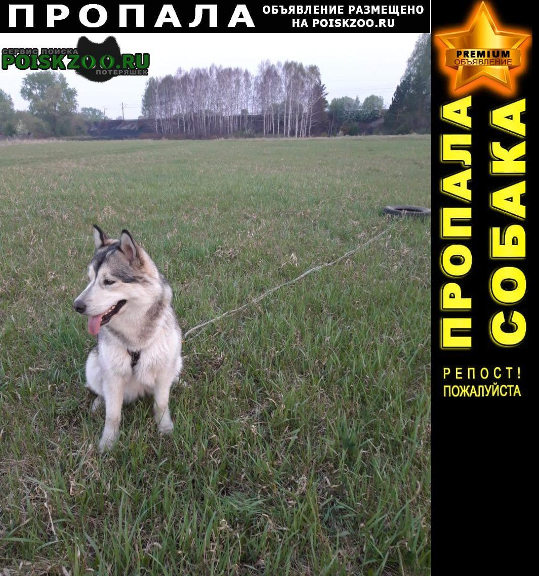 Пропала собака подруга семьи Каменск-Уральский