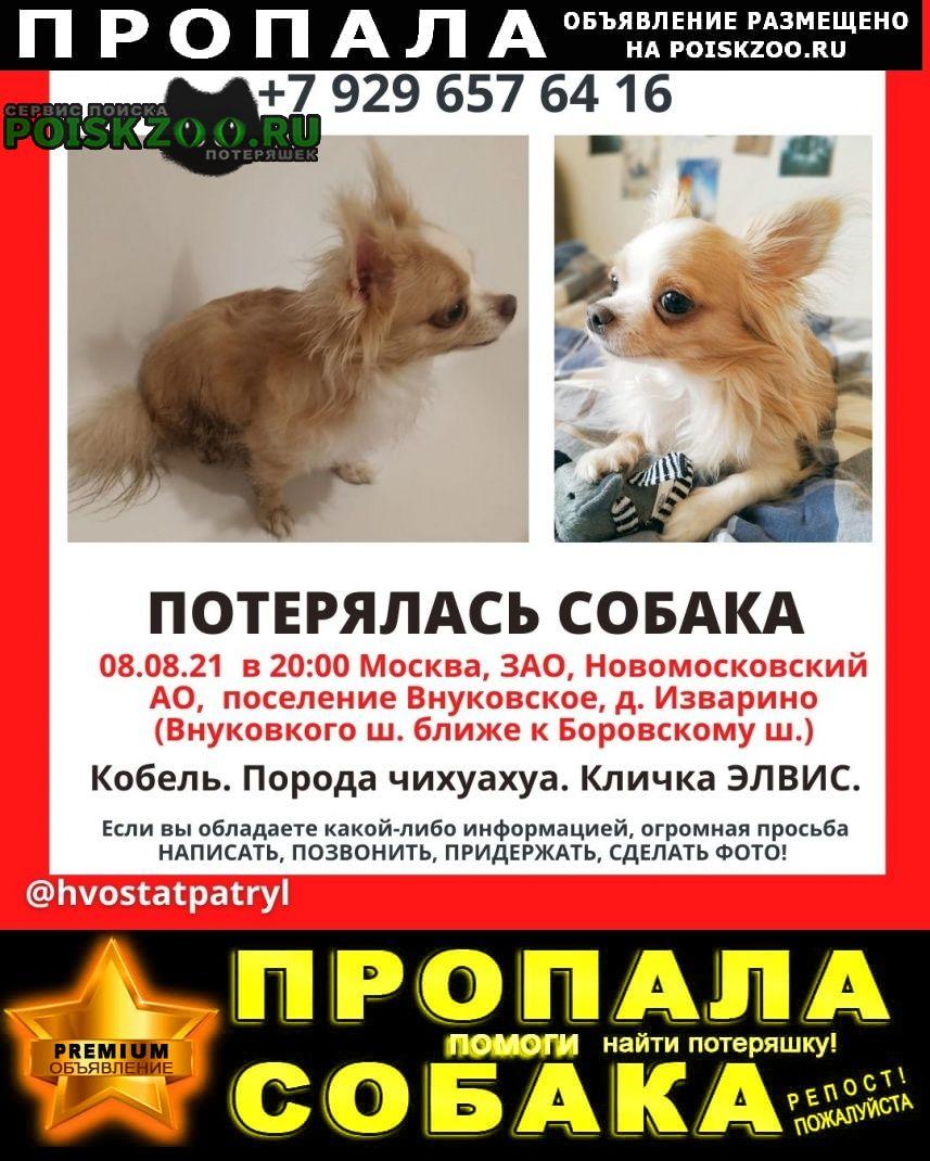 Пропала собака кобель чихуахуа новомосковский Москва