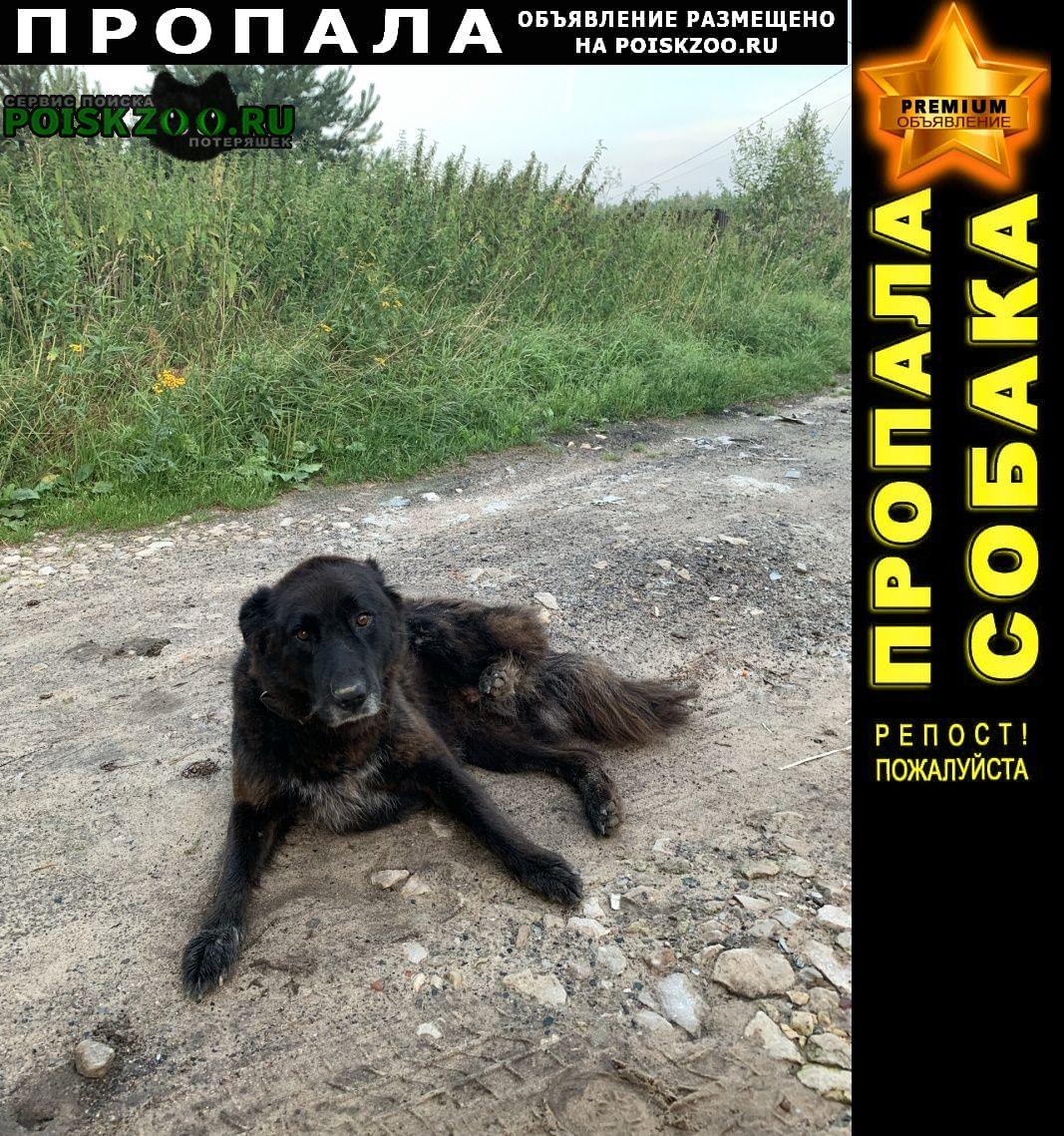 Пропала собака стерилизованная сука в ошейнике Калуга