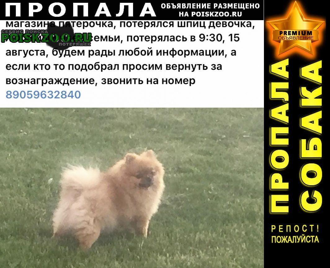 Пропала собака, Кемерово