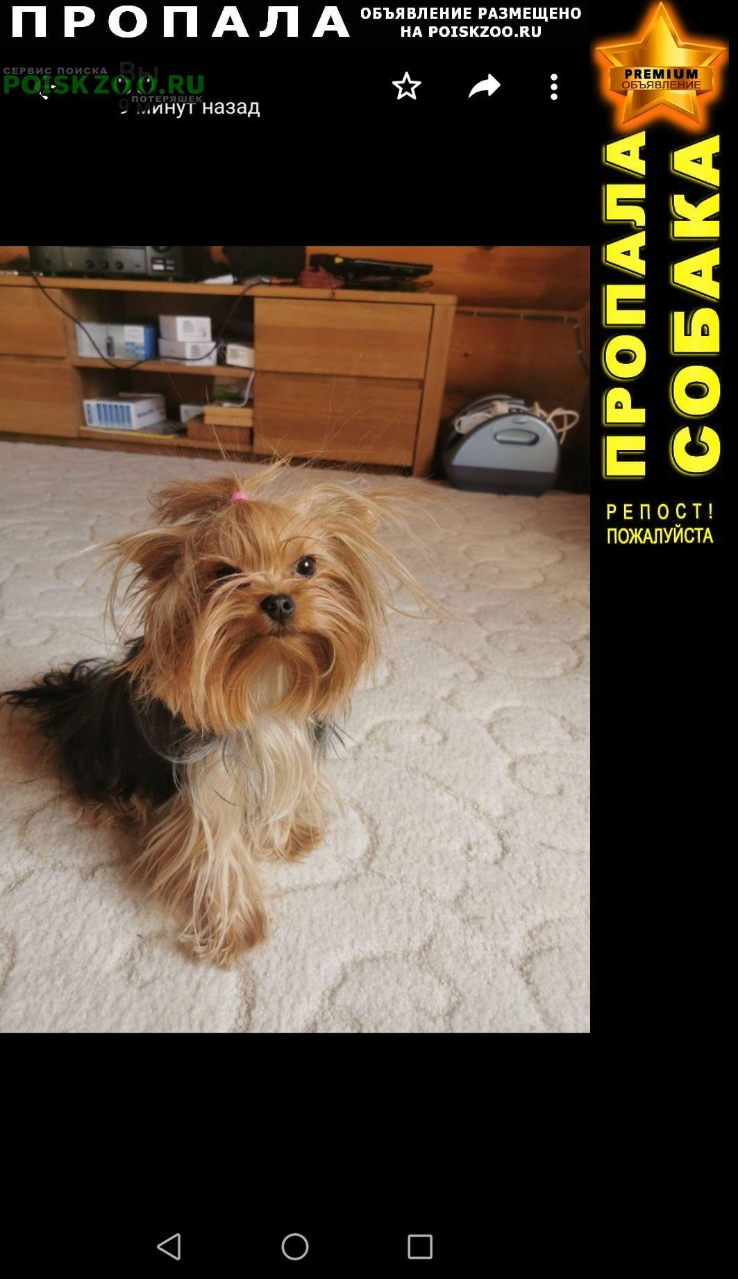 Пропала собака Черногорск Хакасия