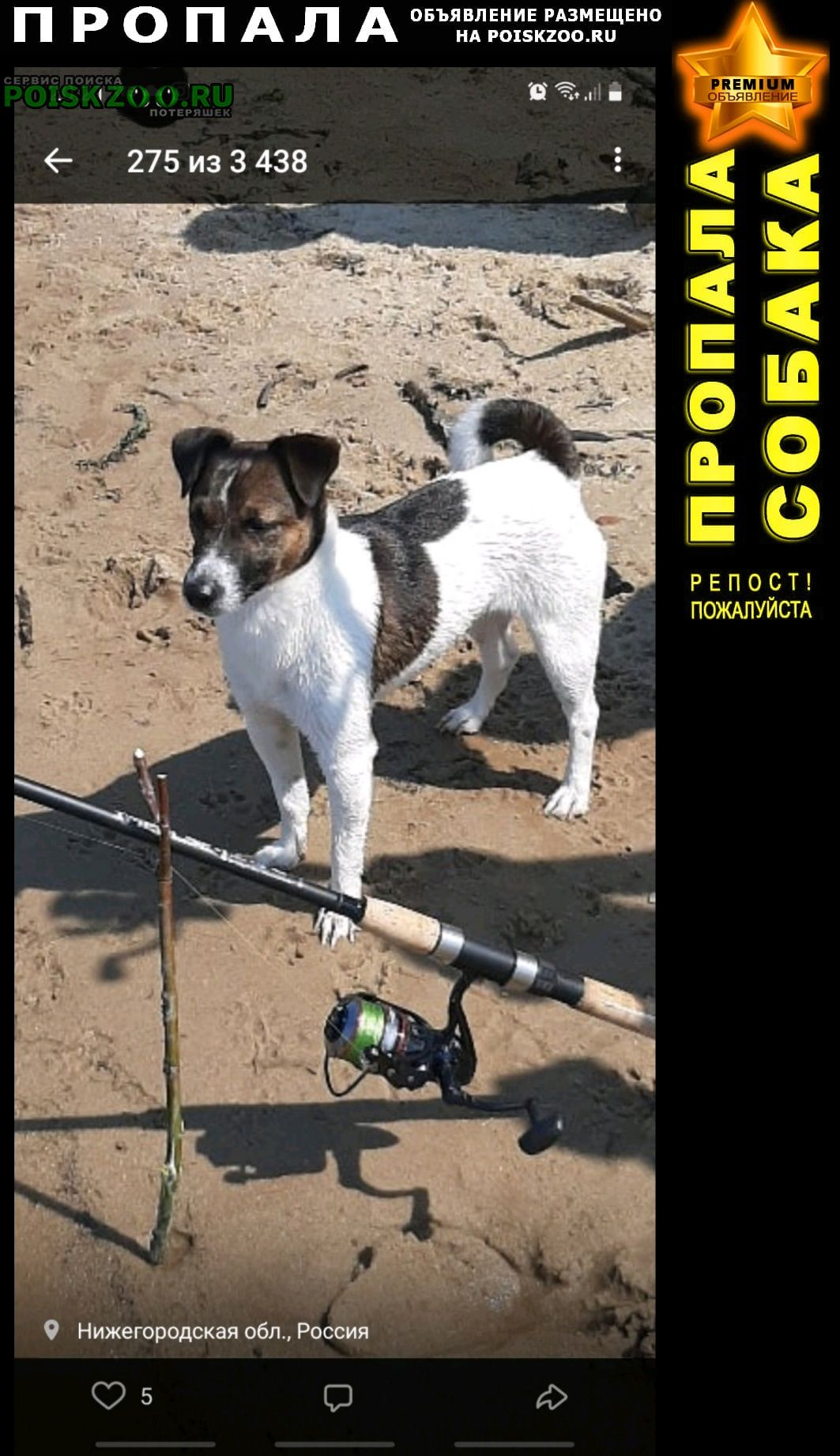Пропала собака кобель г. посёлок дачн Дзержинск