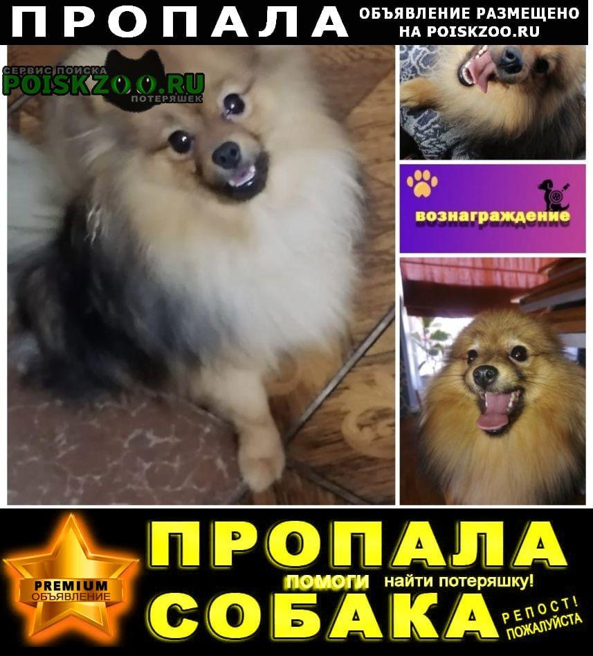 Пропала собака помогите найти за вознаграждение Нижнекамск