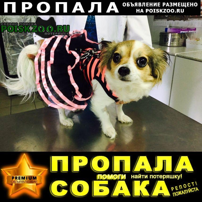 Ростов-на-Дону Пропала собака тачкована. 20 августа