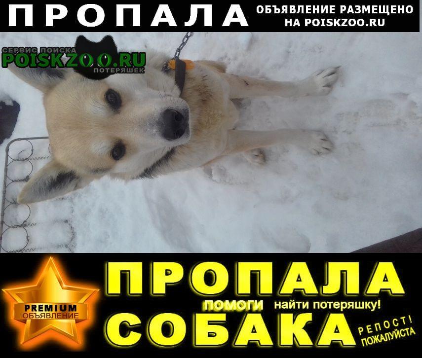 Пропала собака кобель овчарка, вознаграждение 5000р Томск