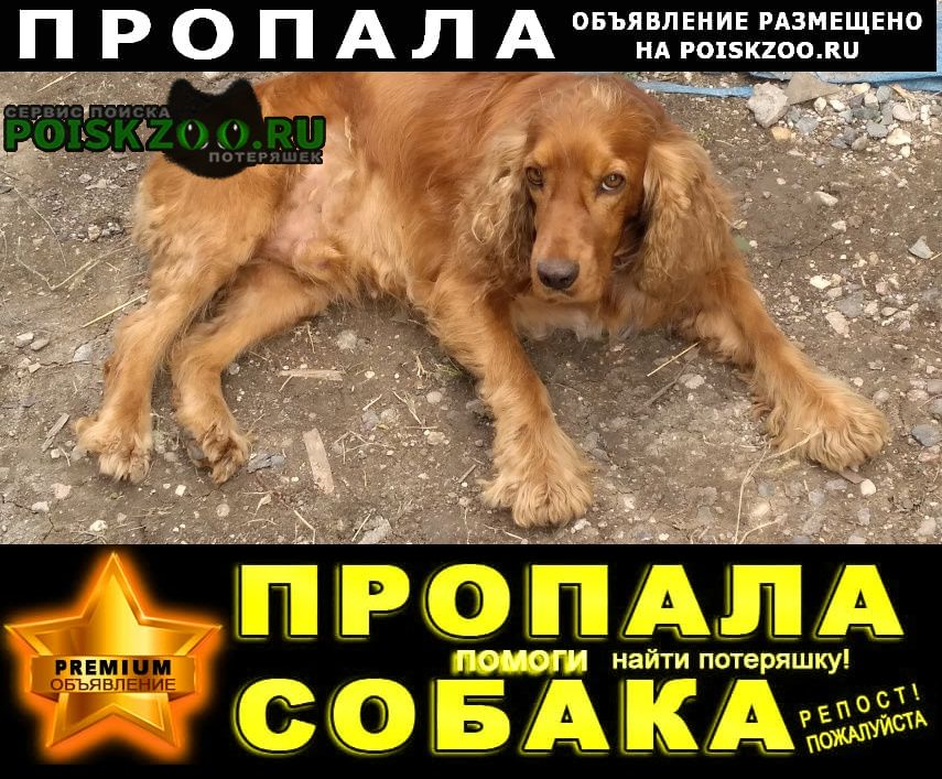Пропала собака кобель ушёл Ессентуки