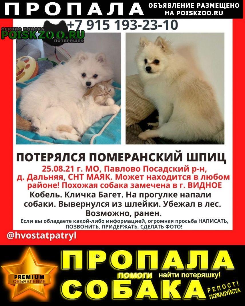 Пропала собака кобель бело-бежевый шпиц Москва