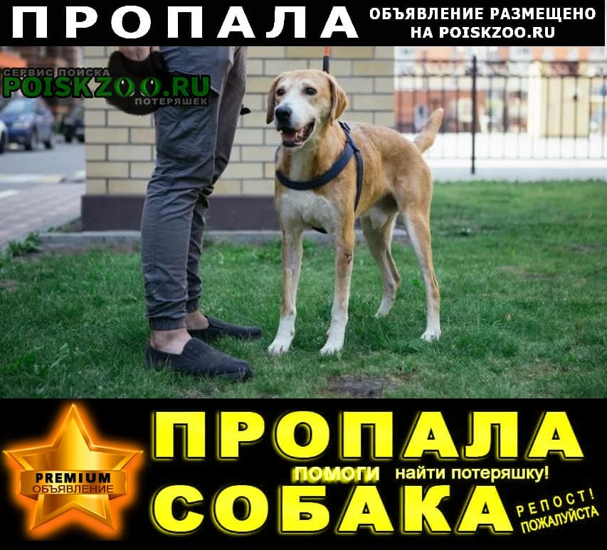 Пропала собака кобель помогите найти Москва