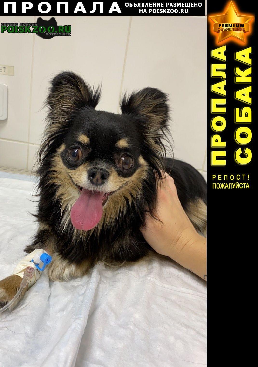 Пропала собака кобель нужна ваша помощь Подольск