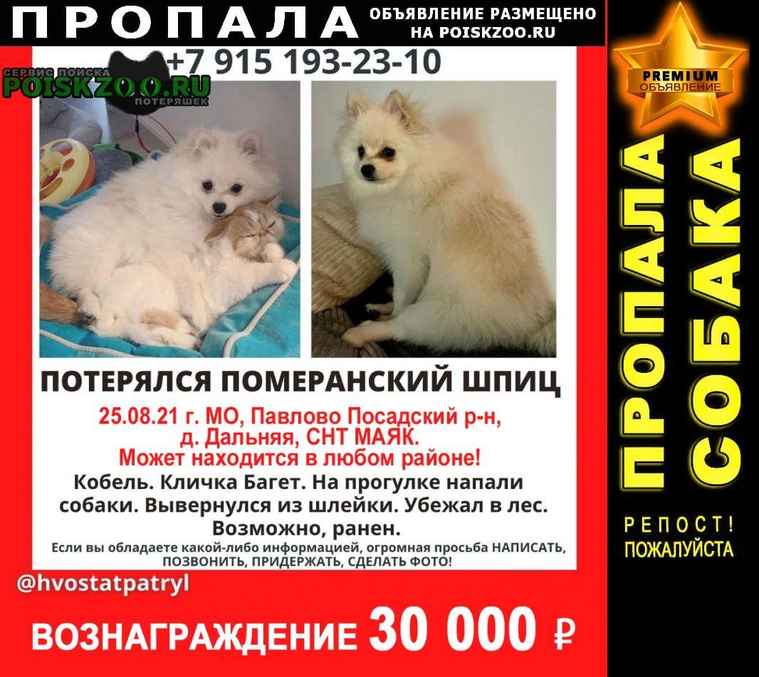 Москва Пропала собака кобель белый померанский шпиц