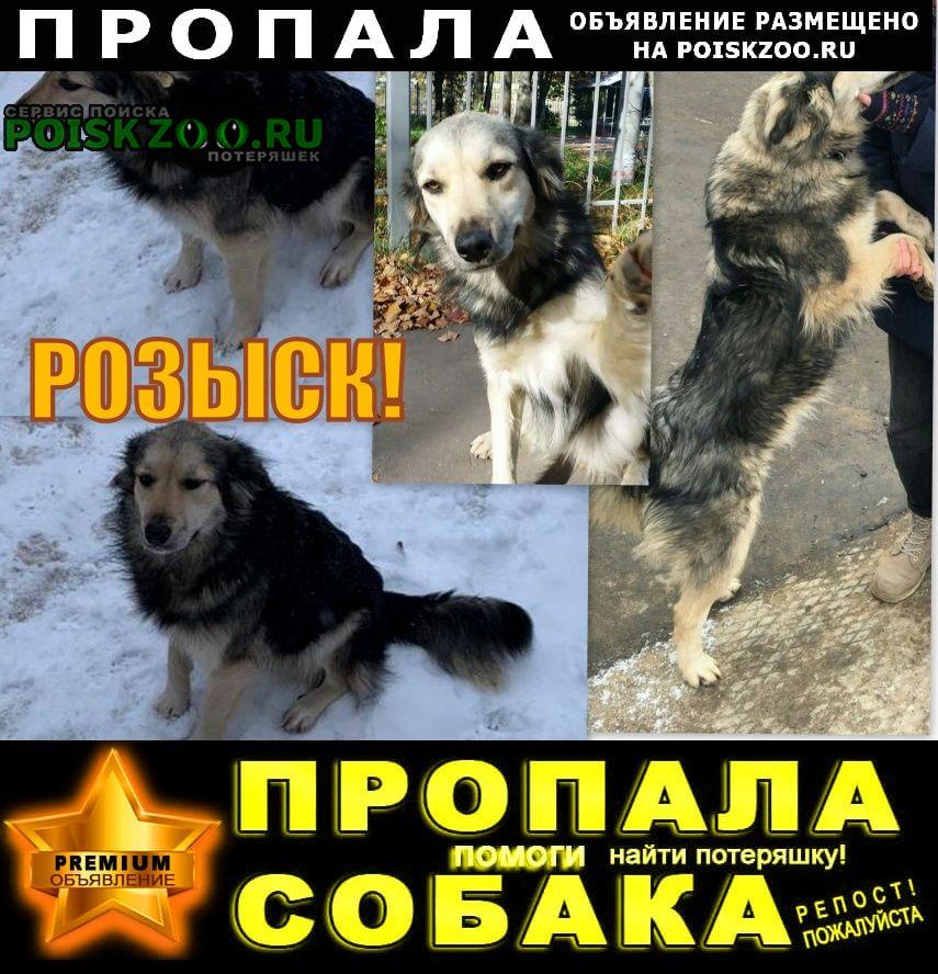 Домодедово Пропала собака в